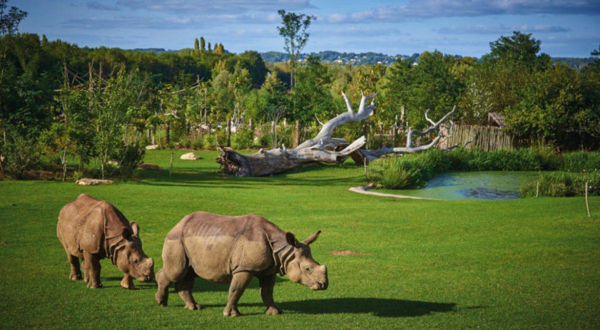 Rhinocéros ©zoo de La Flèche